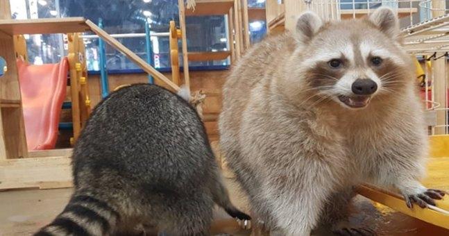 【暑假親子體驗之旅】小浣熊咖啡廳、大阜海邊香氣主題公園、烏耳島挖貝殼餵海鷗一天遊