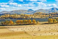 「攝影避暑勝地」烏蘭布統壩上草原(乘坐越野車遊覽,在草原上放空)