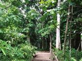 武吉知馬天然保護區