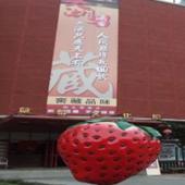 【大湖採果草莓酒莊.泰安湯饗一日遊】│台中自由行套票3-31天