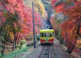 【高尾山紅葉節一天團】東京自由行套票5-31天