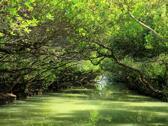 四草溼地保護區