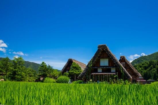 Japan Shirakawa-go summer 日本 白川鄉