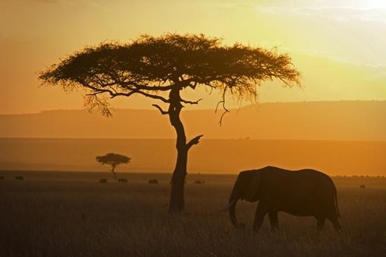瑪沙拉野生動物保護區