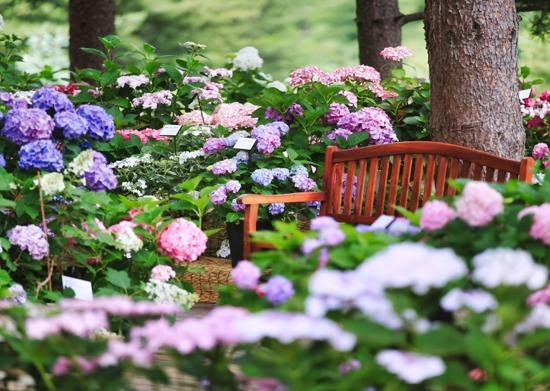 晨靜樹木園(賞繡花)