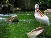 吉隆坡雀鳥公園