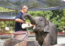 【大象保護區一日遊】 │吉隆坡自由行套票 3-7天