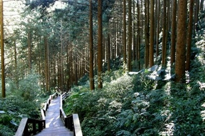 阿里山_奮起湖站森林步道