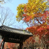 【內藏山紅葉鑑賞一天遊】首爾自由行套票5-31天