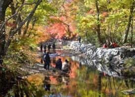 【秋戀韓楓】禪雲山道立公園+採露水蘋果一天團 | 首爾自由行套票3-14天