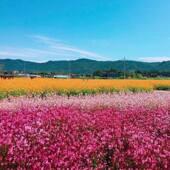 【馬場湖吊橋、波波草公園、有機迷你蘋果一天團】首爾自由行套票3-14天