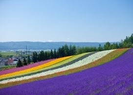 【北海道人氣觀光景點一天團】札幌自由行套票5-31天