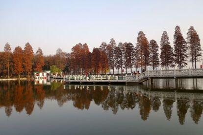 東湖綠道水杉紅葉