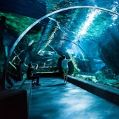 【SEA LIFE 海洋世界】 | 曼谷自由行套票3-14天