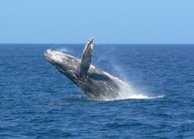 【冬季限定 - 賞鯨之旅】沖繩自由行套票3-31天