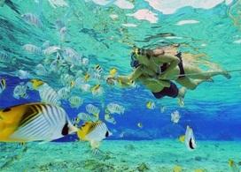 【格蘭島浮潛一日遊 】芭堤雅自由行套票3-14天