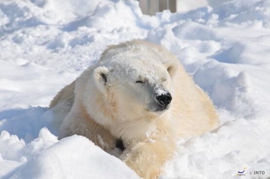 北海道冬日7天之旅《2020年12月1日起出發適用》