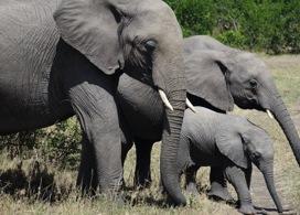 【華欣野生動物基地大象看護體驗】│華欣自由行套票3 - 14天