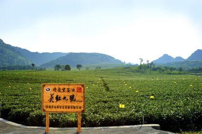 積慶里茶園