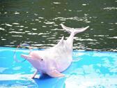 芭提雅海豚世界