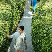 【星耀樟宜樹籬迷宮+星空花園門票】新加坡自由行套票3-14天