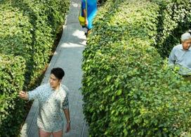 【星耀樟宜樹籬迷宮+星空花園門票】憑推廣碼「GP920」每位即減$200|新加坡自由行套票3-14天