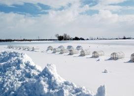 【篠津湖冰上釣魚體驗】札幌自由行套票5-31天