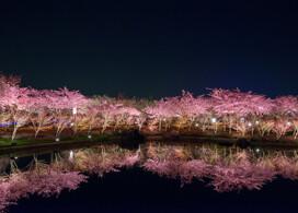 【浪漫燈海「名花之里」一天團】大阪自由行套票3-31天