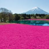 【富士山周邊兩大花卉節、任摘任食草莓一天團】東京自由行套票3-31天