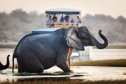 【稅項全包】津巴布韋(維多利亞大瀑布)、博茨瓦納(高比野生動物保護區)、南非(開普頓、桌山、好望角) 9天深度體驗之旅
