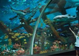 【聖淘沙名勝世界 - S.E.A. 海洋館】新加坡自由行套票3-14天