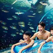 【聖淘沙名勝世界水上探險樂園一日電子門票 】新加坡自由行套票3-31天
