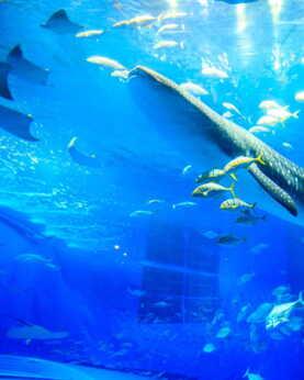 【美麗海水族館】沖繩自由行套票3-31天