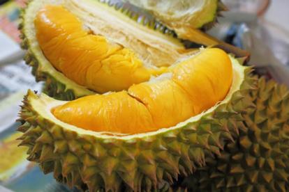檳城、怡保、太平美食暢玩5天之旅. 【悉心安排】品嚐馬來西亞各種名貴榴槤任食及時令水果
