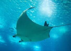 【杜拜水族館及水下動物園】杜拜自由行套票4-31天