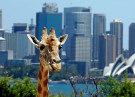 【Taronga Zoo 塔龍加動物園】悉尼自由行套票4-31天