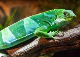 【爬蟲動物園】悉尼自由行套票4-31天