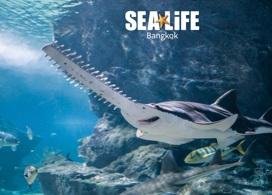 【曼谷暹羅海洋世界】 | 曼谷自由行套票3-14天