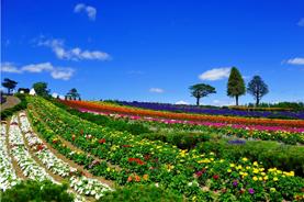 北海道 花の美景5天之旅《8月31日前出發適用》