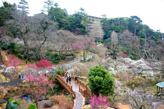 東京、伊豆半島梅花祭5天之旅 《2021年1月10日至3月5日出發適用》