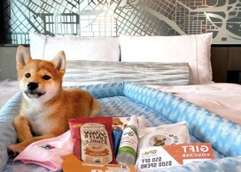 【香港維港凱悅尚萃酒店】同愛犬同眠│Staycation Package