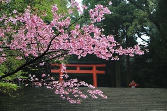 南北九州春日溫泉7天之旅