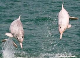【香港城景國際】中華白海豚觀賞之旅+早餐│Staycation Package