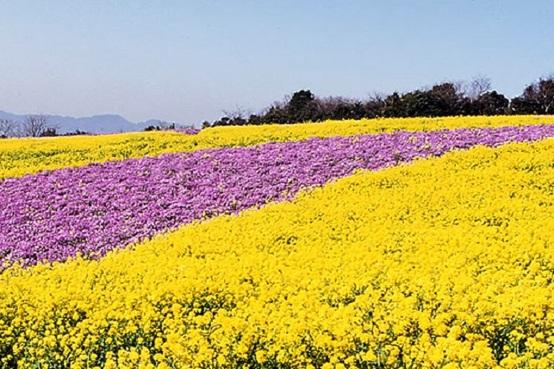 【澳門出發】淡路島(賞花)、京阪神(賞景)5天之旅 《2021年3月1日起出發適用》