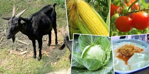 富琴有機農莊入場套票(包:  自摘一斤有機蔬菜 + 豆漿一杯、豆腐花一碗 +贈送一紮草 餵羊咩咩)