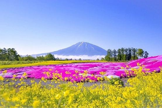 北海道 花の美景5天之旅《出發日期: 5月1日至8月31日》