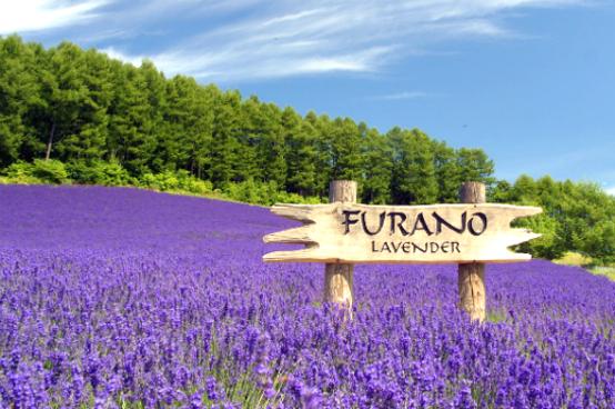 北海道擁抱自然7天之旅《6月1日至9月15日出發適用》