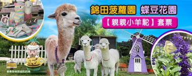 菠蘿園/蝶豆花園【親親羊駝】套票