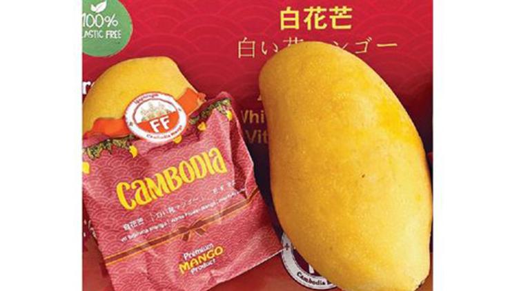 【柬埔寨直送🥭】皇室白花芒 (約3.2kg, 7-9隻)  $228