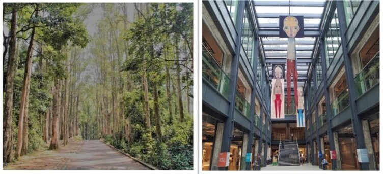 皇家太平洋酒店-宴會廳自助午餐 ﹑ 城門水塘(白千層樹林) ﹑ 南豐紗廠一天遊(HKRRM01A)